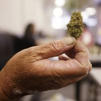 Marijuana legalization effort begins in California
