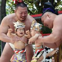 In ancient tradition, sumo wrestlers reduce babies to bawling bundles