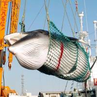 Japan's Antarctic whaling bid faces IWC scrutiny after scientific challenge