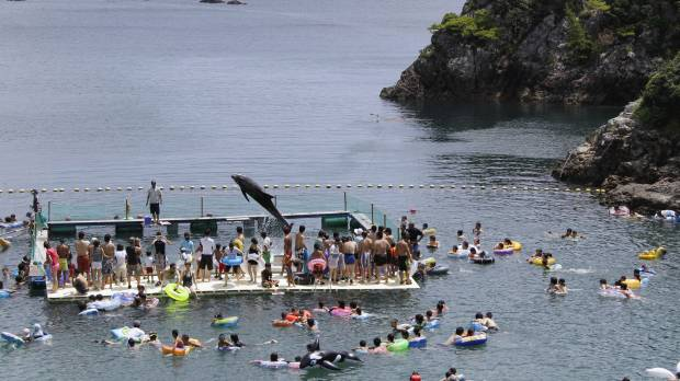 Kaikoura and Taiji: a tale of two whaling towns