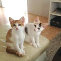 Cinderella sisters: cats named Clarinda and Lonsdale