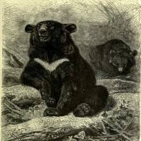 The bear cheek of our woodland friends