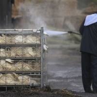 WHO says new bird flu strain in Europe is likely to spread; humans can be treated