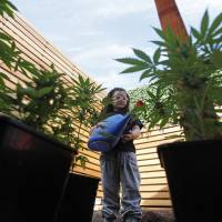 Seven-year-old epilepsy sufferer Javiera Canales holds a watering can on Nov. 16 amid pots of cannabis plants grown for their oil. Her mother, Paulina Bobadilla, knows cultivation is illegal, but says a few drops a day lessens Javiera's seizures. | AP