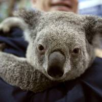 World leaders at G-20 meet line up to take part in 'koala diplomacy'