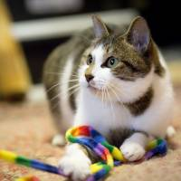 JCN on mission to tackle Japan's stray-cat problem