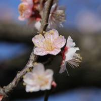 Finding thrills on plum blossom hill