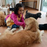Dogs by the hour: Pet rental services thrive in space-cramped Tokyo