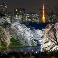 Sakura 2015: one nation under a pink canopy