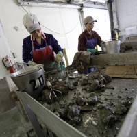 Hope fades for Gulf oystermen five years after BP oil spill disaster