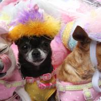 They may not be bonnets but NYC Easter paraders keep a lid on