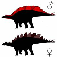 Shape of Stegosaurus plates varied for males and females, study says
