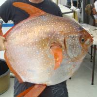 Deepwater fish found to be warm-blooded