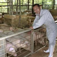 Shizuoka farm plies its pigs with green tea instead of water