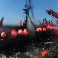 Interest grows in Spain's 3,000-year-old tuna netting tradition