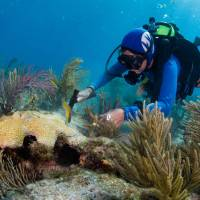 Research finds certain corals have DNA to adapt to warmer climate