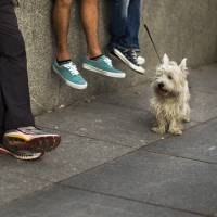 U.S. funeral homes increasingly using dogs to comfort mourners