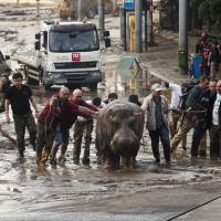 Tigers and lions roam Tbilisi after flooding that killed 10 people