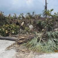 Florida environmentalists inflamed after protected mangroves are illegally cleared for boat show