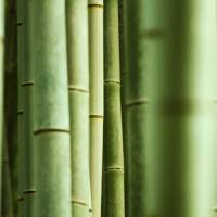 To know bamboo is to know Asia — and a whole lot of Japanese