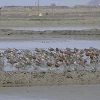 As habitats vanish, migratory birds flock to North Korea shores