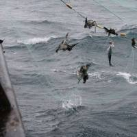 No politics behind Russia drift net ban: experts