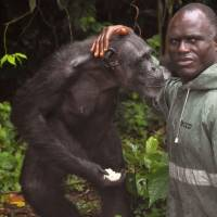 Help urged for research chimps on Liberia isle