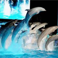 No drop in orders for Taiji dolphins despite restriction