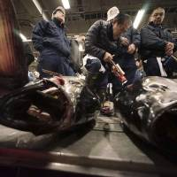 Panel to draft controls on bluefin tuna fishing amid fears for stocks