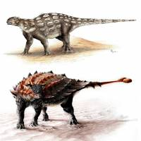 King of clubs: intriguing tale of the 'tank' dinosaur's tail