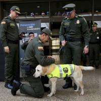 Dog's discovery leads Colombia, Mexico airport cops to 2 metric tons of cocaine disguised as toner
