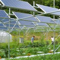 Solar power farms grow in shadow of Fukushima plant