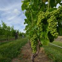 Virginia's Middleburg offers wine country getaway