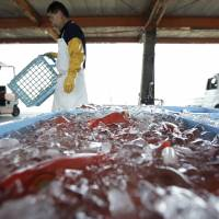 TPP fishery impact to be 'limited,' for now: farm ministry