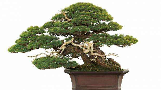 Bonsai Exhibition in a World Heritage of Nikko