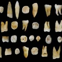 Humans left Africa sooner than thought, entered China before Europe: tooth study