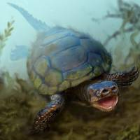 Pig-snouted turtle from dinosaur era is discovered in Utah