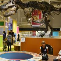 Nature museum's exhibition for preschoolers proves popular