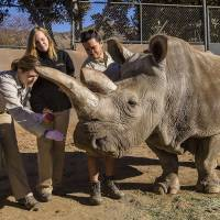 San Diego Zoo euthanizes ailing rare white rhino, 41; Kenya sanctuary has world's remaining three