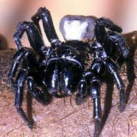 Aussie police rush to scene of killing, find dead spider