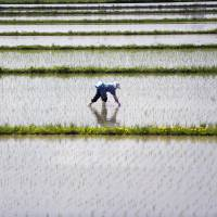 Japan's farming crisis worsens as one in five workers abandoned roots in past five years