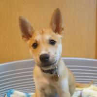 Lovable mutt: a mixed-breed pup named Ozzie