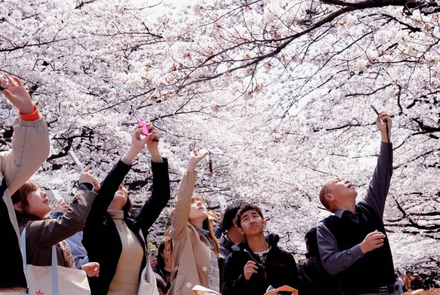 Shutterbugs capture the fleeting photo op under Ueno Park