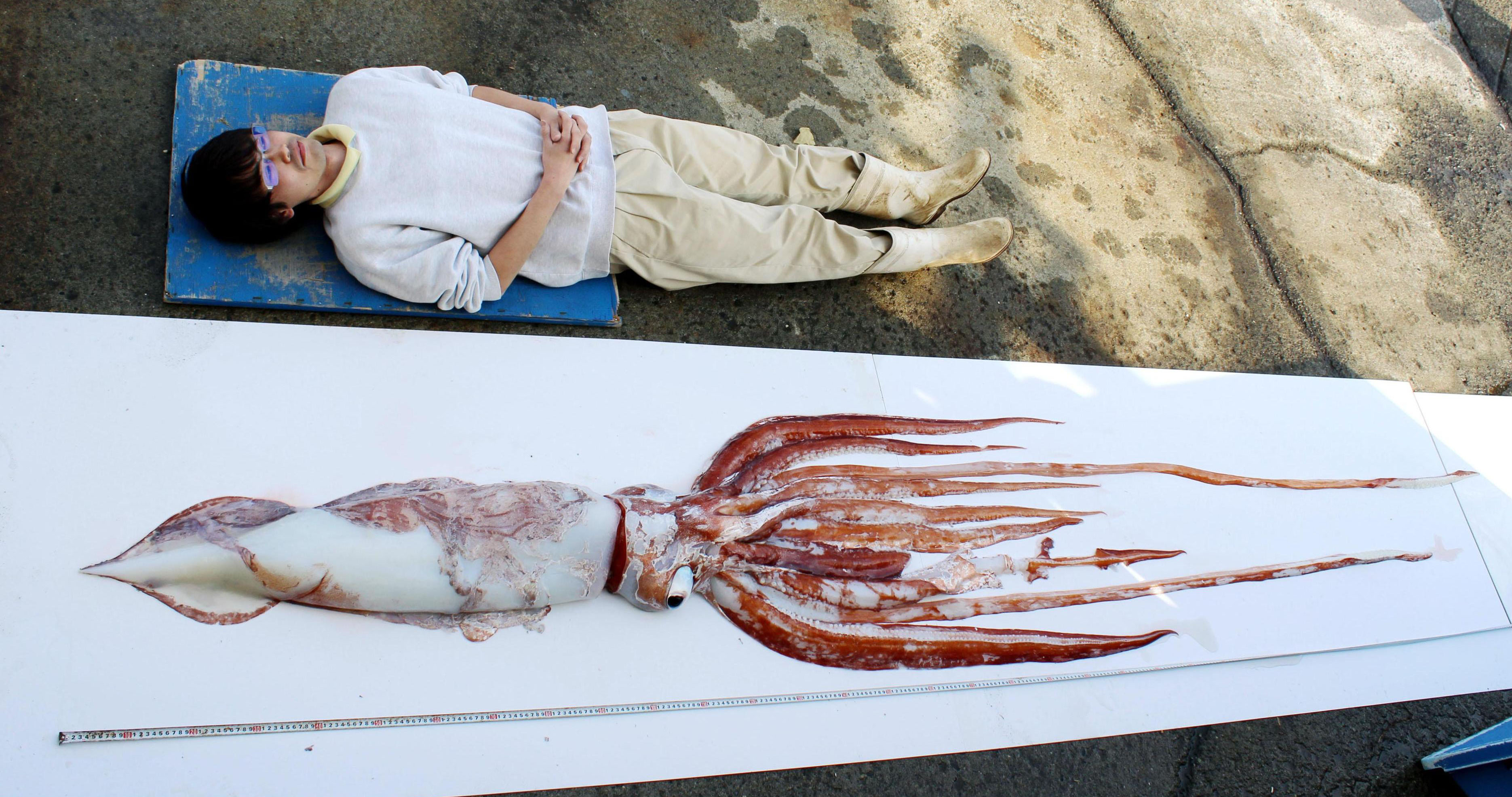 Little Seen Giant Squid Caught In Tokyo Bay The Japan Times